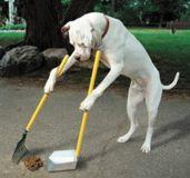 Урны для собачих площадок